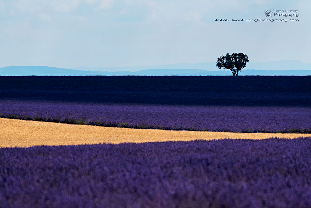 Lavender-Graphic-Design - ©Jean Huang Photography