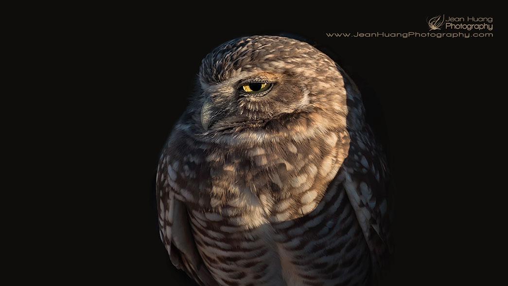 I-Like-You-Look-Burrowing-Owl-Salton-Sea-California-USA-Copyright-Jean-Huang-Photography