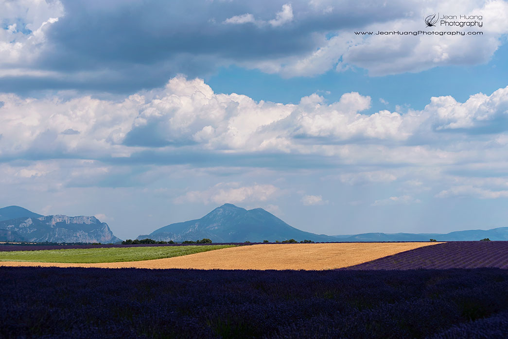 Lavender-Graphic-Design-Valensole-Provence-France-Copyright-Jean-Huang-Photography-(5)