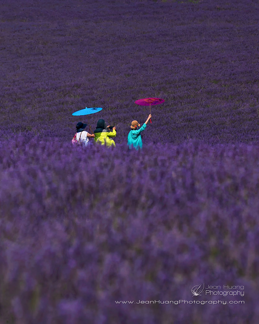 Tourists-with-Umbrellas-in-Lavender-Field-Valensole-Provence-France-Copyright-Jean-Huang-Photography