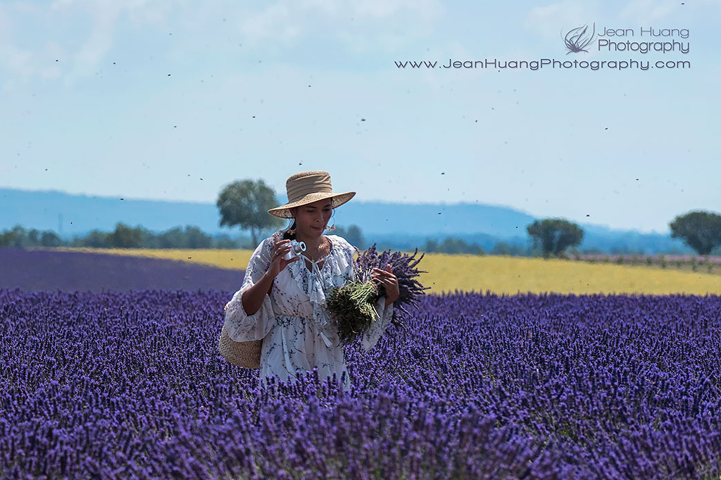 Tourist-Plucking-Bundles-of-Lavenders-Valensole-Provence-France-Copyright-Jean-Huang-Photography