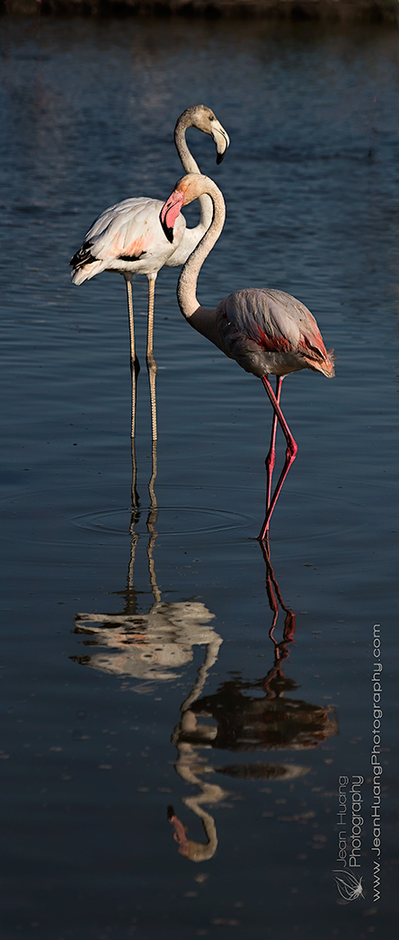 Pink-Flamingo-and-its-Shadow-Camargue-France-Copyright-Jean-Huang-Photography-(3)