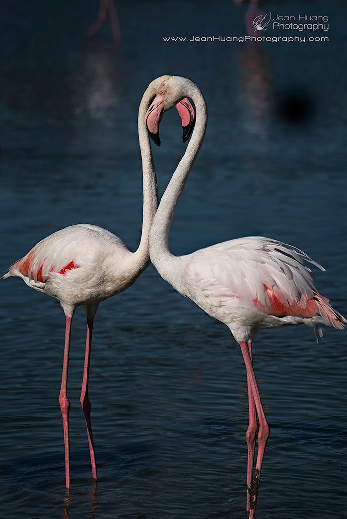 "Pink Flamingo and Its ""Shadow"" - ©Jean Huang Photography"