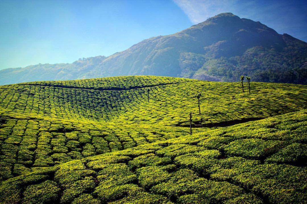 Not cool. I think someone slipped me a photoshop and now everything looks weird.— in  Munnar .