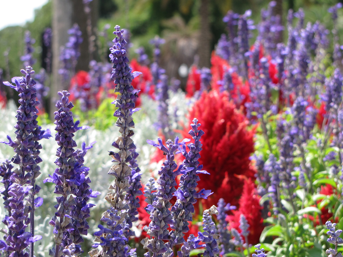 Depth_of_Flower_Field_IMG_1137_web.jpg