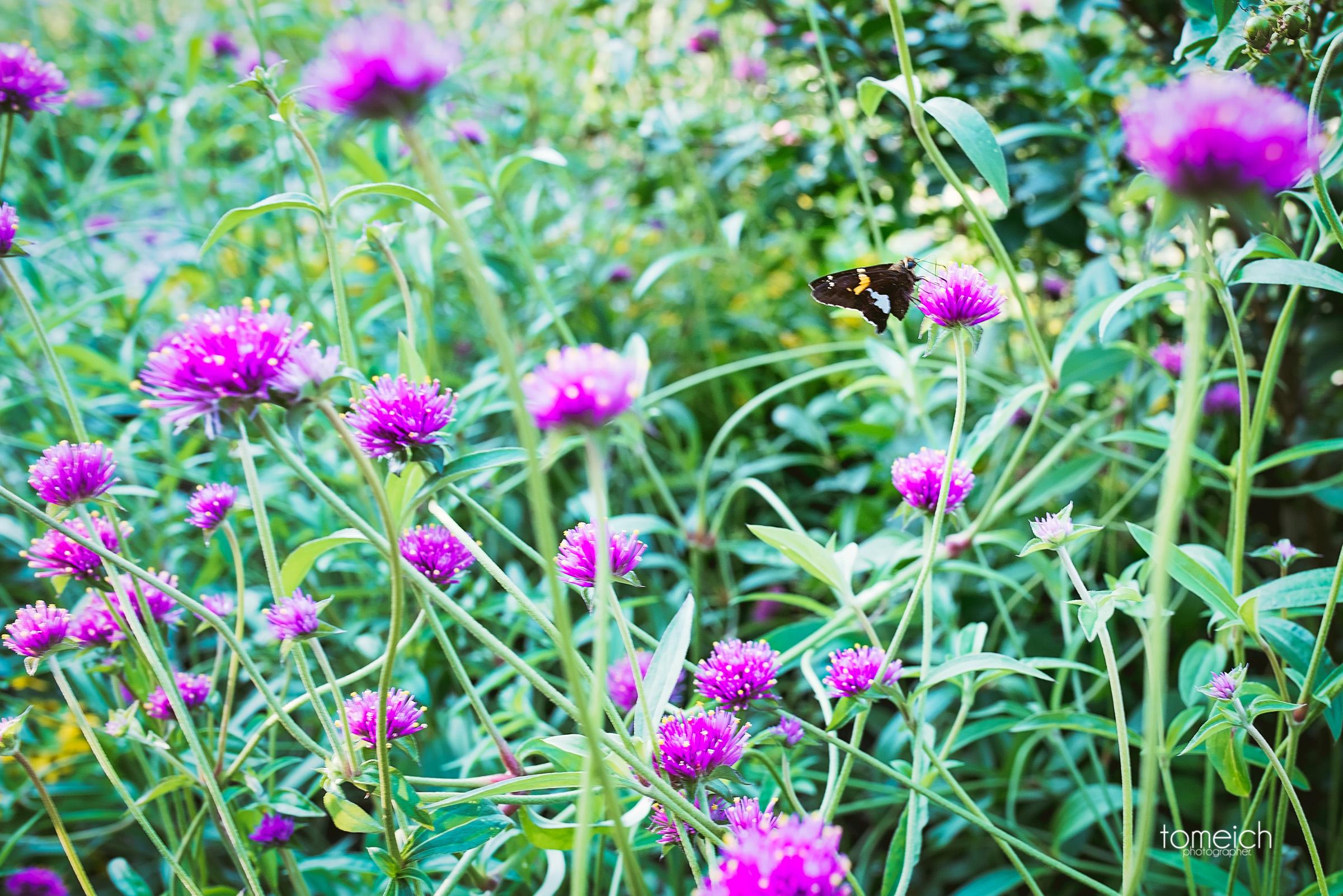 butterfly house wedding chesterfield-25.jpg