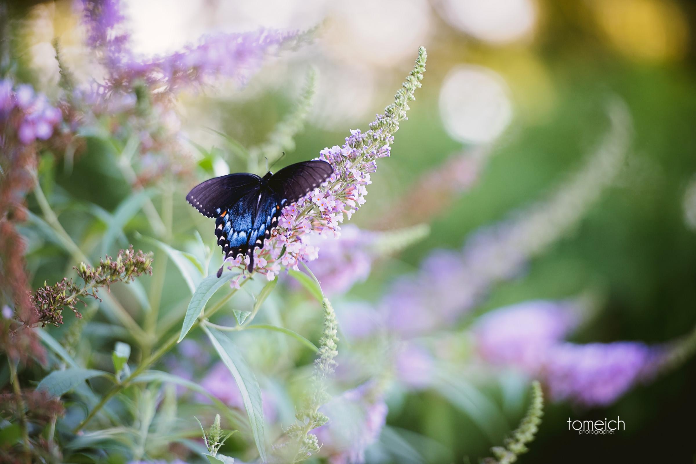 butterfly house wedding chesterfield-32.jpg