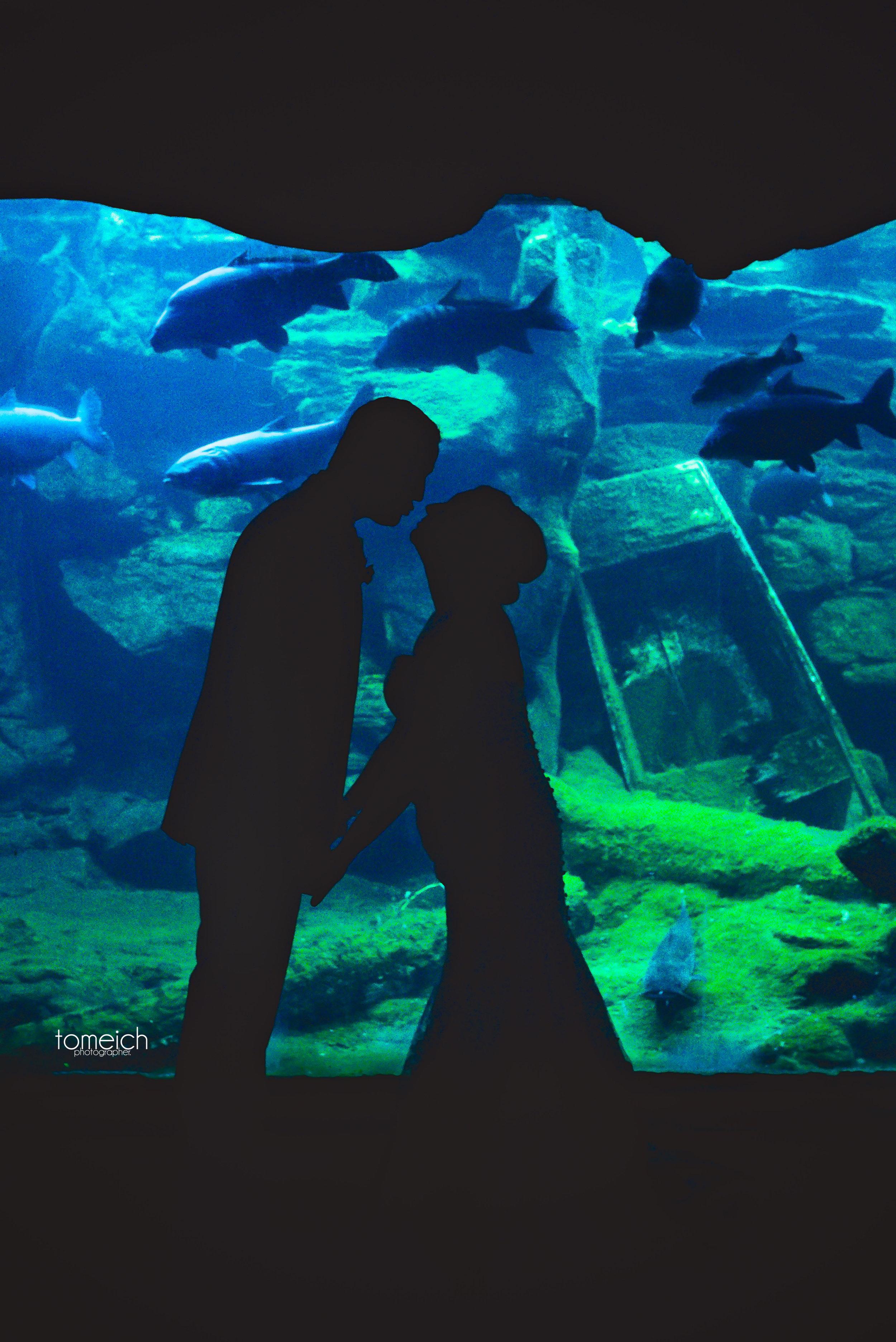 stl zoo wedding
