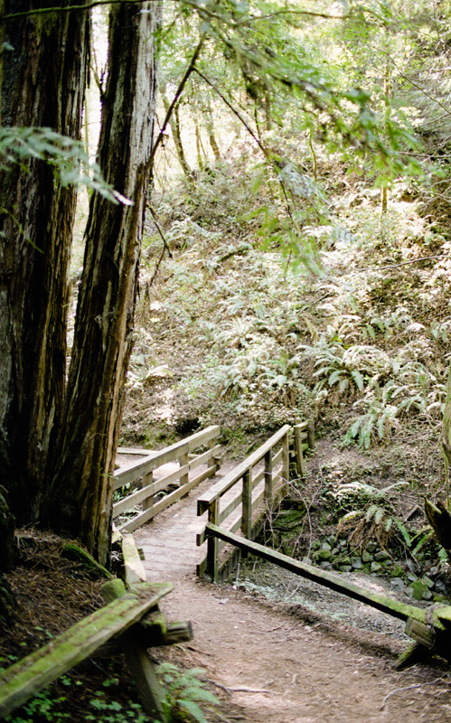 armstrong redwood natural reserve guerneville california