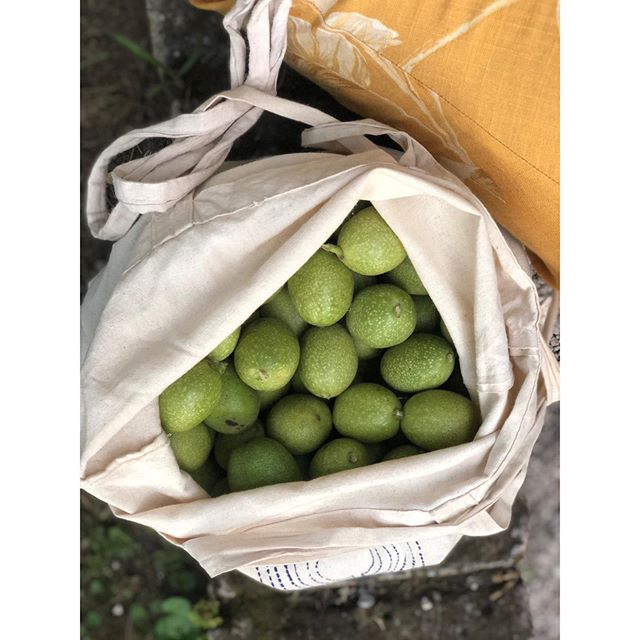 On San Giovanni's day [June 24], I liberated 5kg of green #noci di Sorrento, from my friend's farm in Campania. I carried them back to Sicily on the ferry + put them in a massive jug of hooch for my first batch of homemade #nocino walnut liqueur. 🌿 A special thanks to @katieparla's cookbook + #golapodcast for a sweet recipe. ⚡️| Nola, Campania  #cheekytravel . . . . .