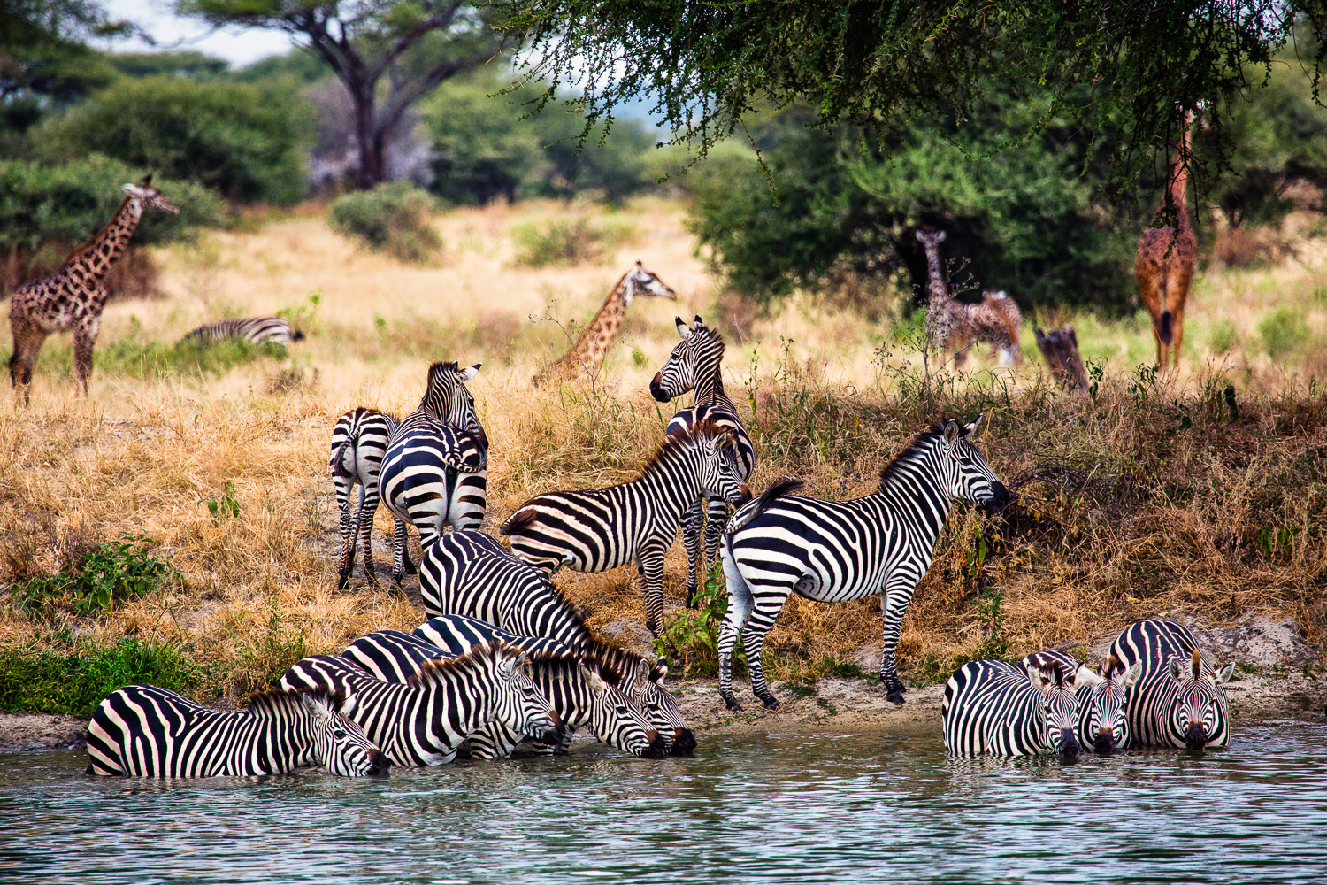 The Water Hole Serengeti, Tanzania