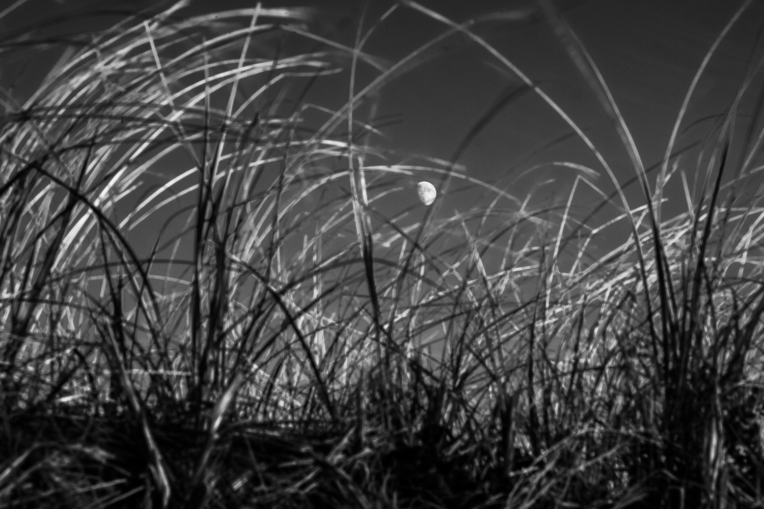 Moon Through The Grass Chatham, Massachusetts