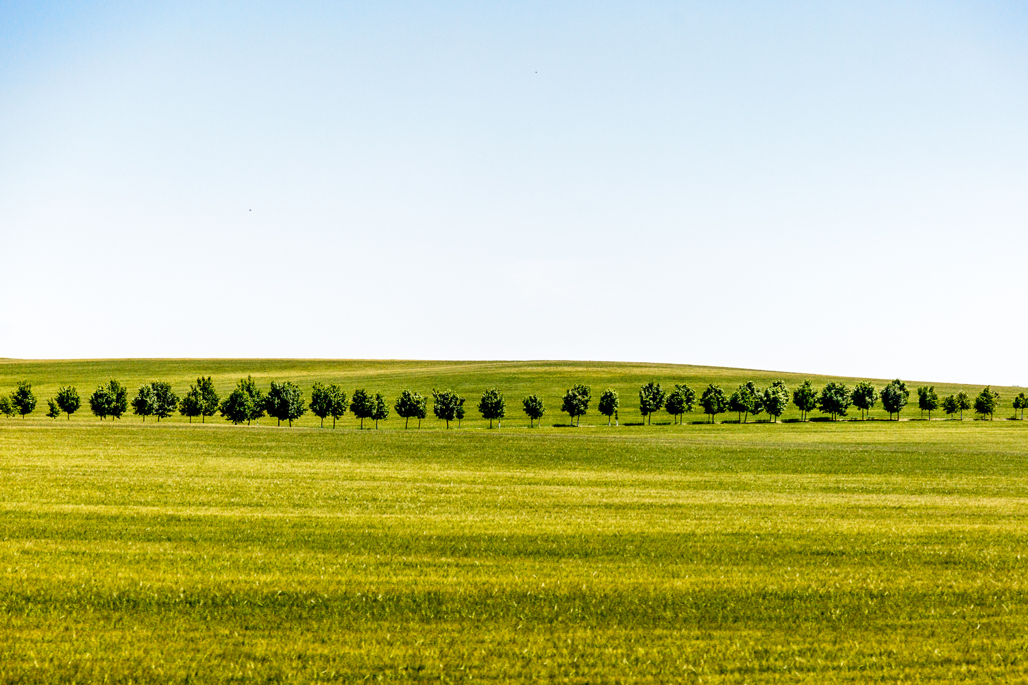 Trees-Field-Prague.jpg