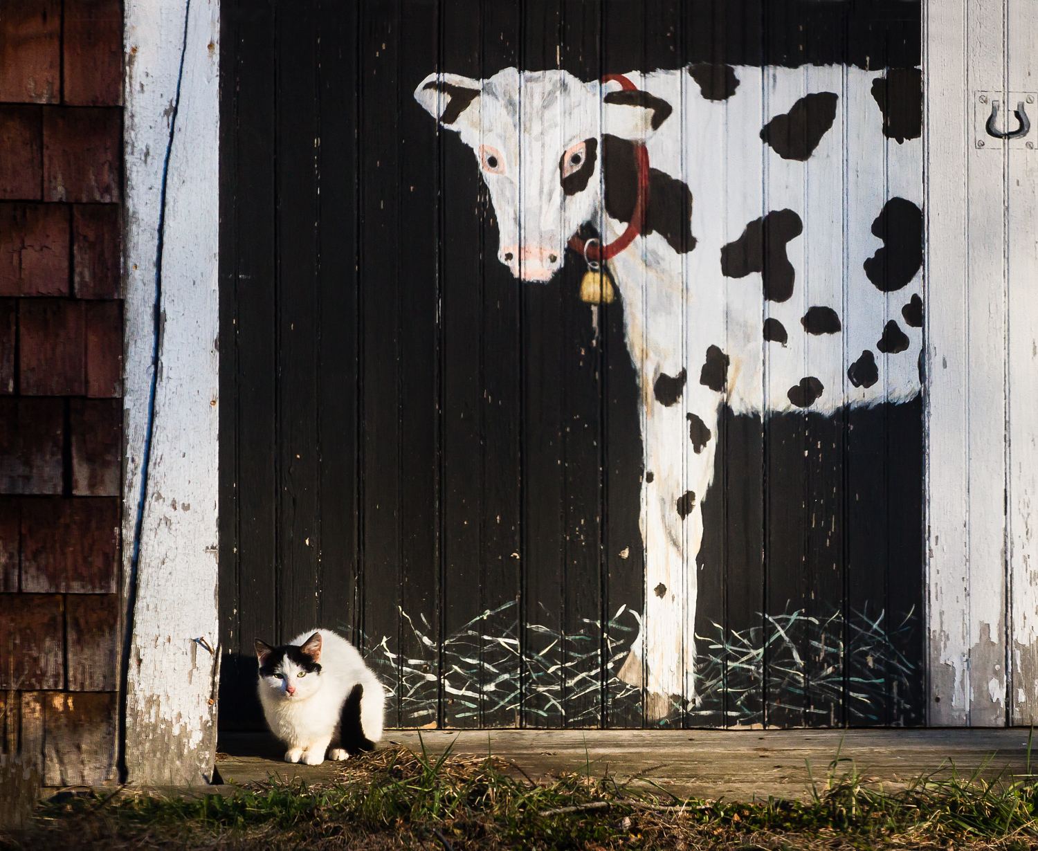 Cat And The Cow Sherborn, Massachusetts