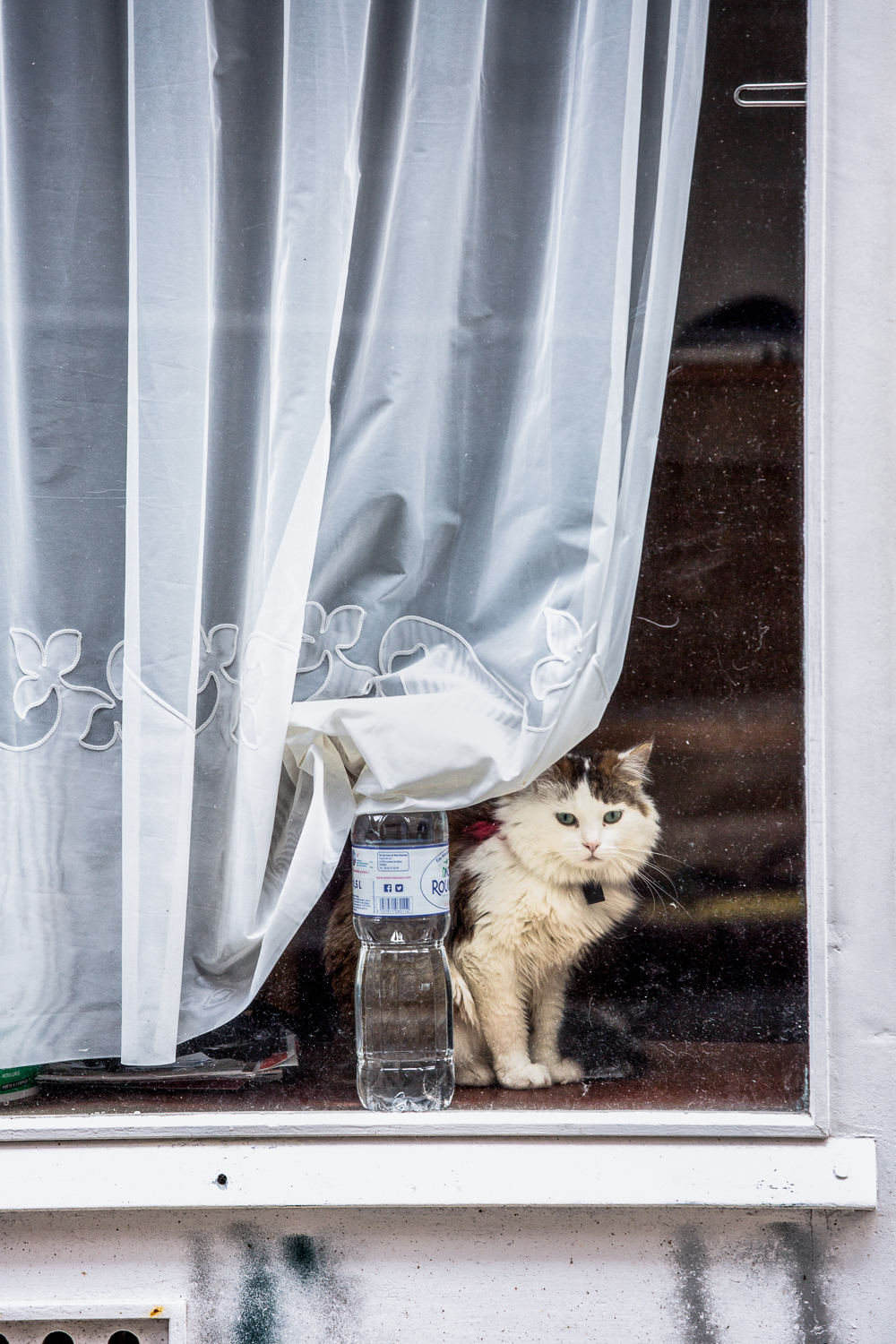Cat-In-Window.jpg