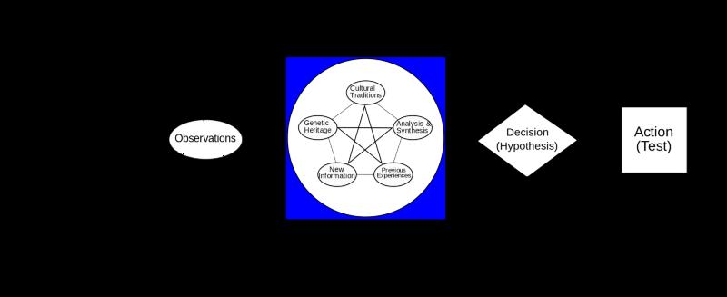 John Boyd's OODA Loop (Wikimedia Commons)