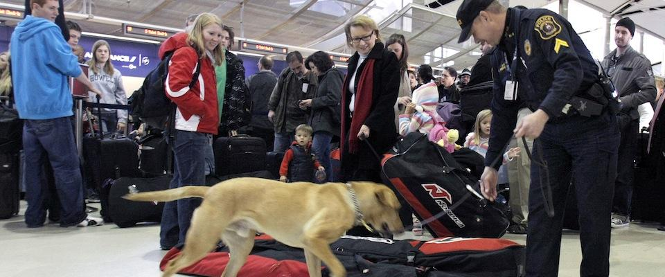 Bomb-sniffing dog at the Detroit airport. (Photo by Bill Pugliano)