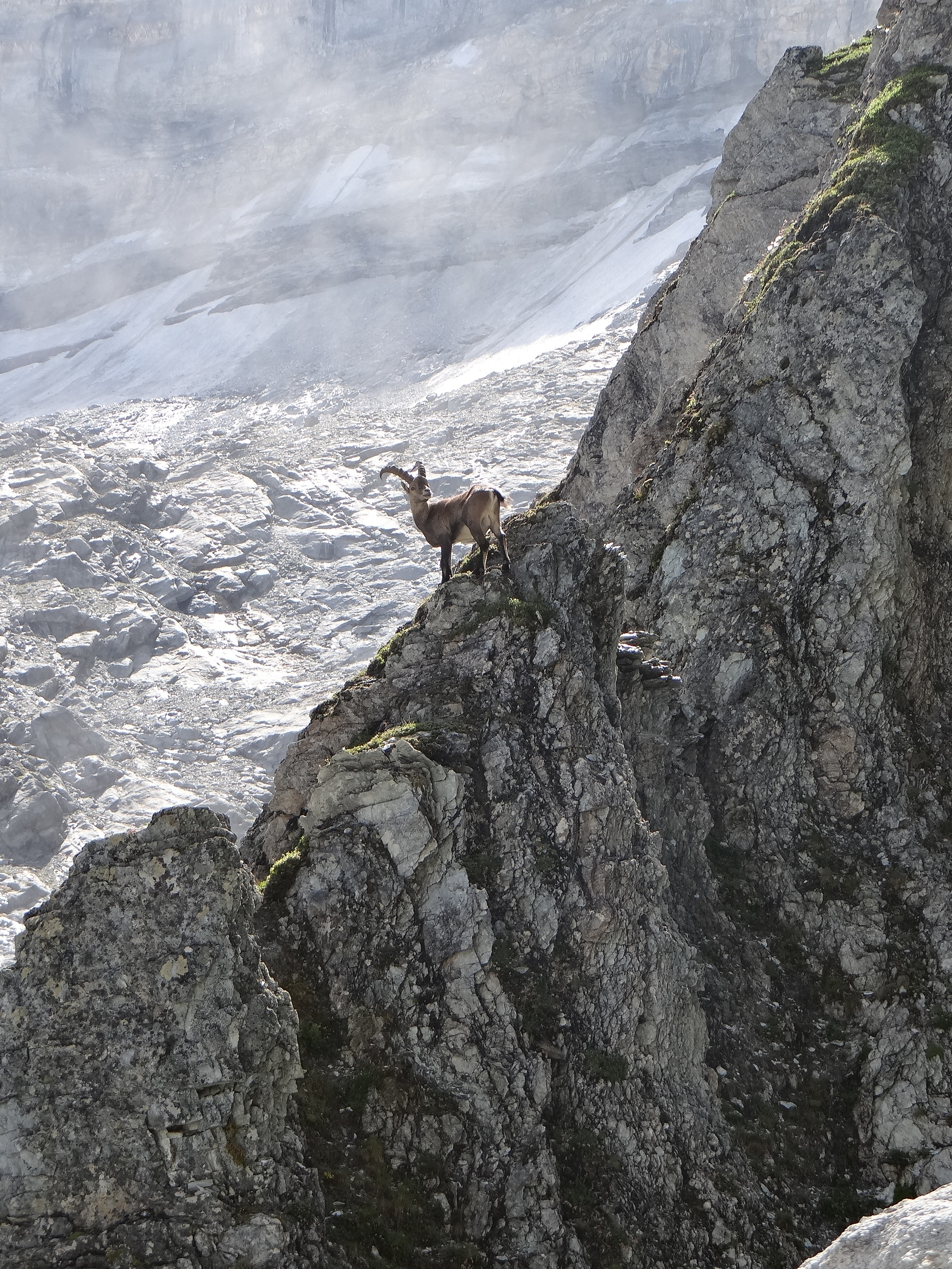 An Ibex, presumably a descendant of the lucky survivor from the Panjshir folktale. (Wikimedia)