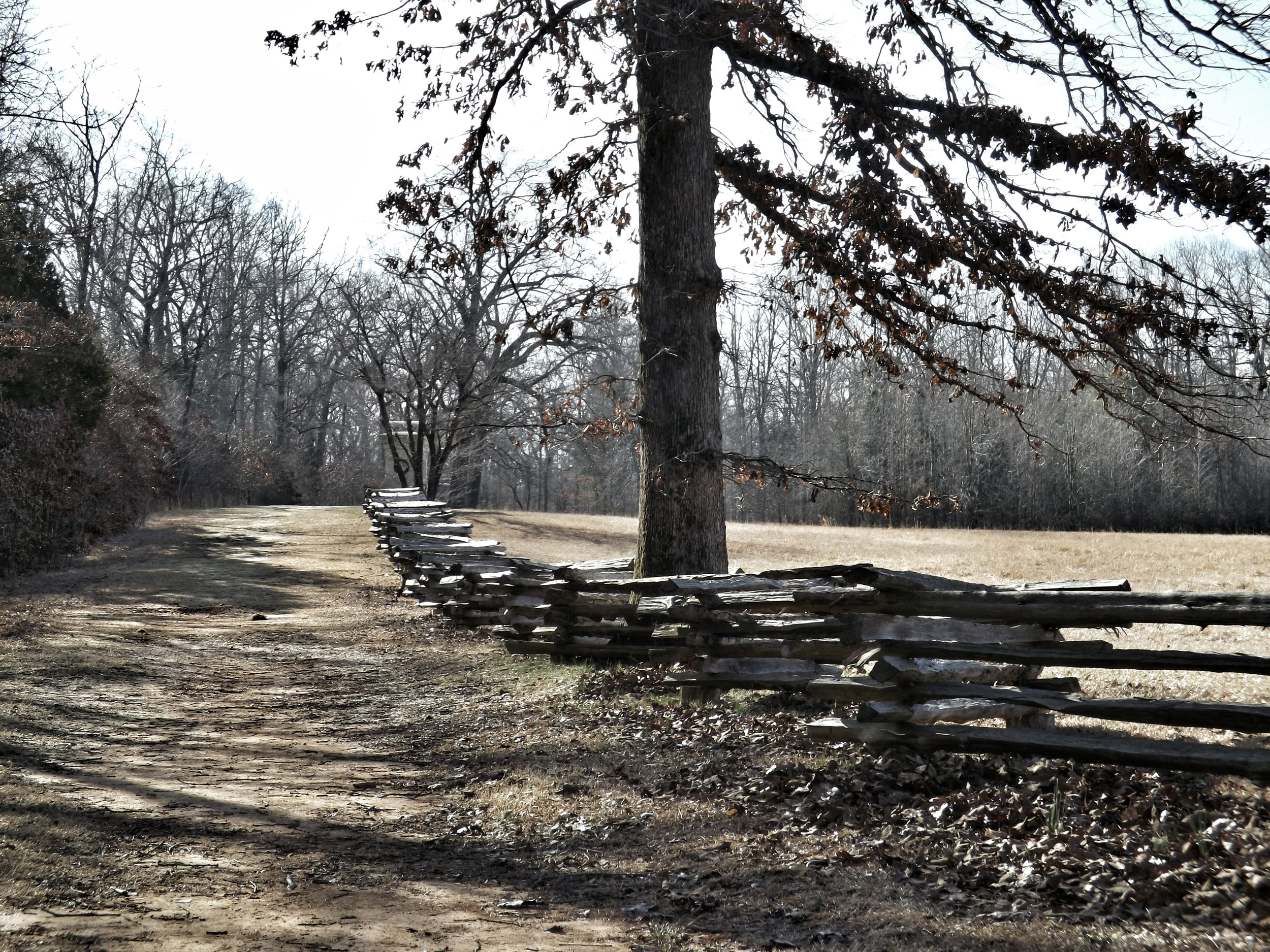 Sunken Road, Shiloh National Battlefield (David Whelan/Wikimedia)