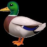 """""""Quack"""""""