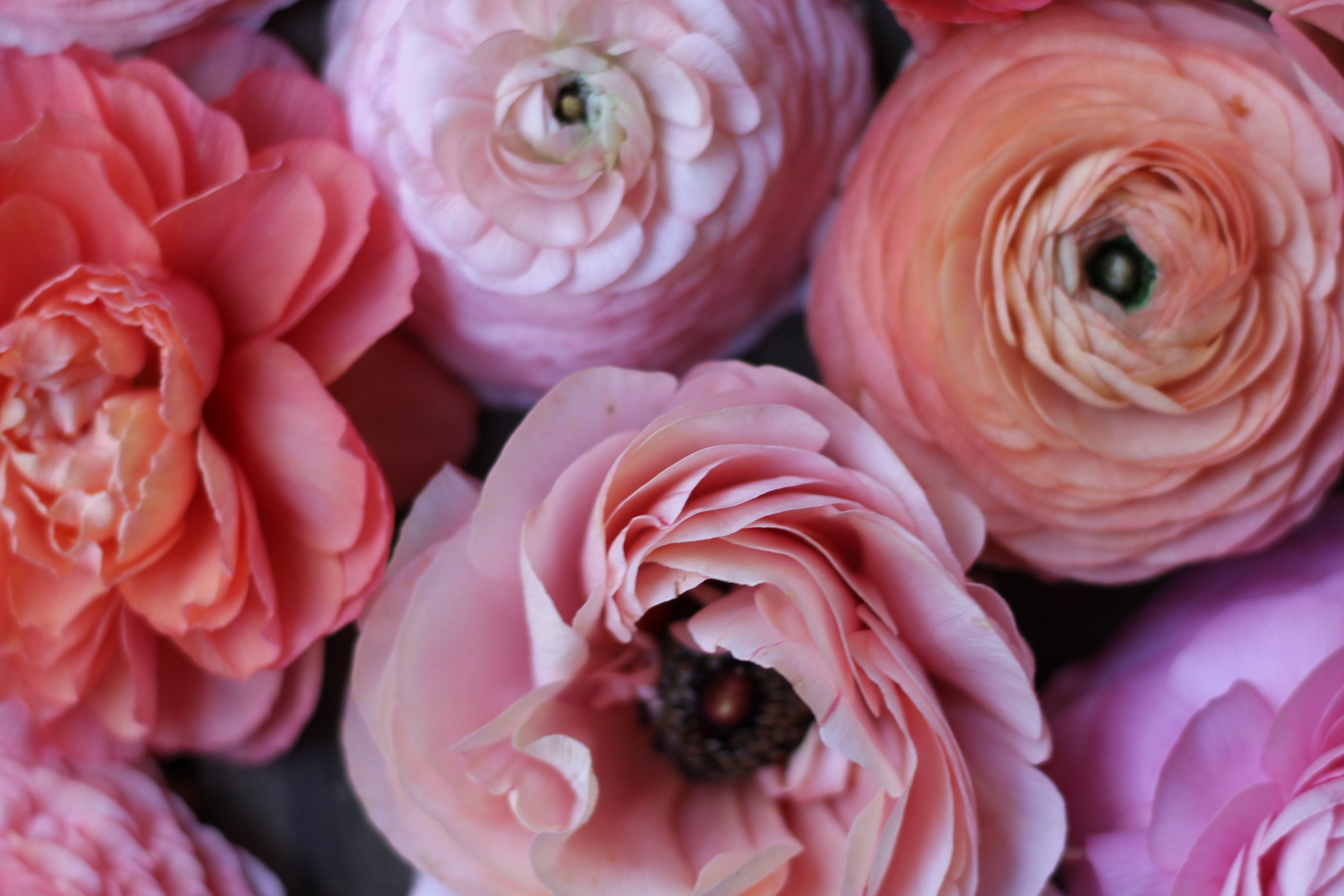 The flowers. The workshops. The Weddings. The Peonies. The Farmstand. -