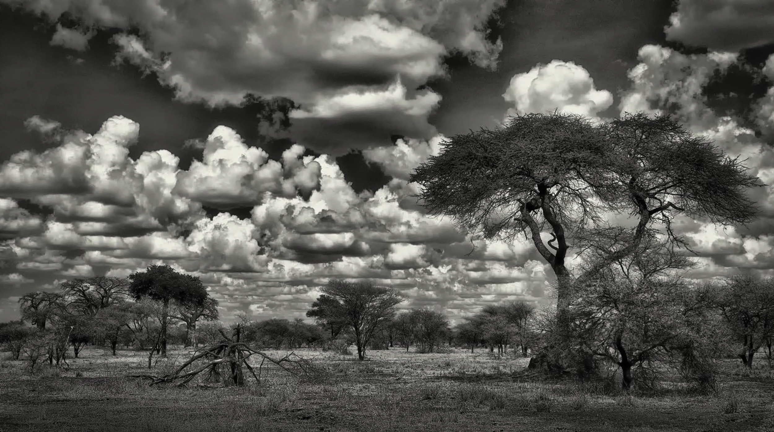 Serengeti Clouds 1