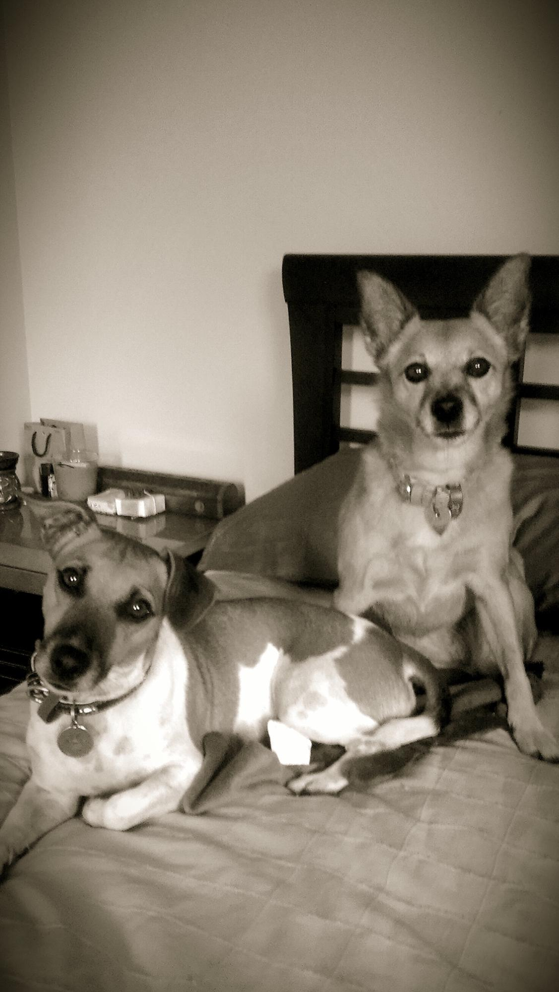 My two beautiful dogs.