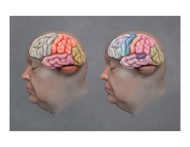 BrainAnatomy.jpg