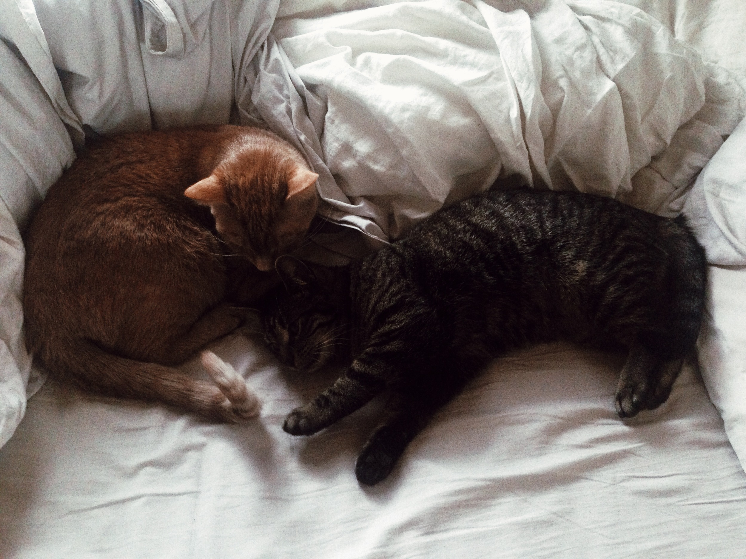 My cats because their love is infectious.