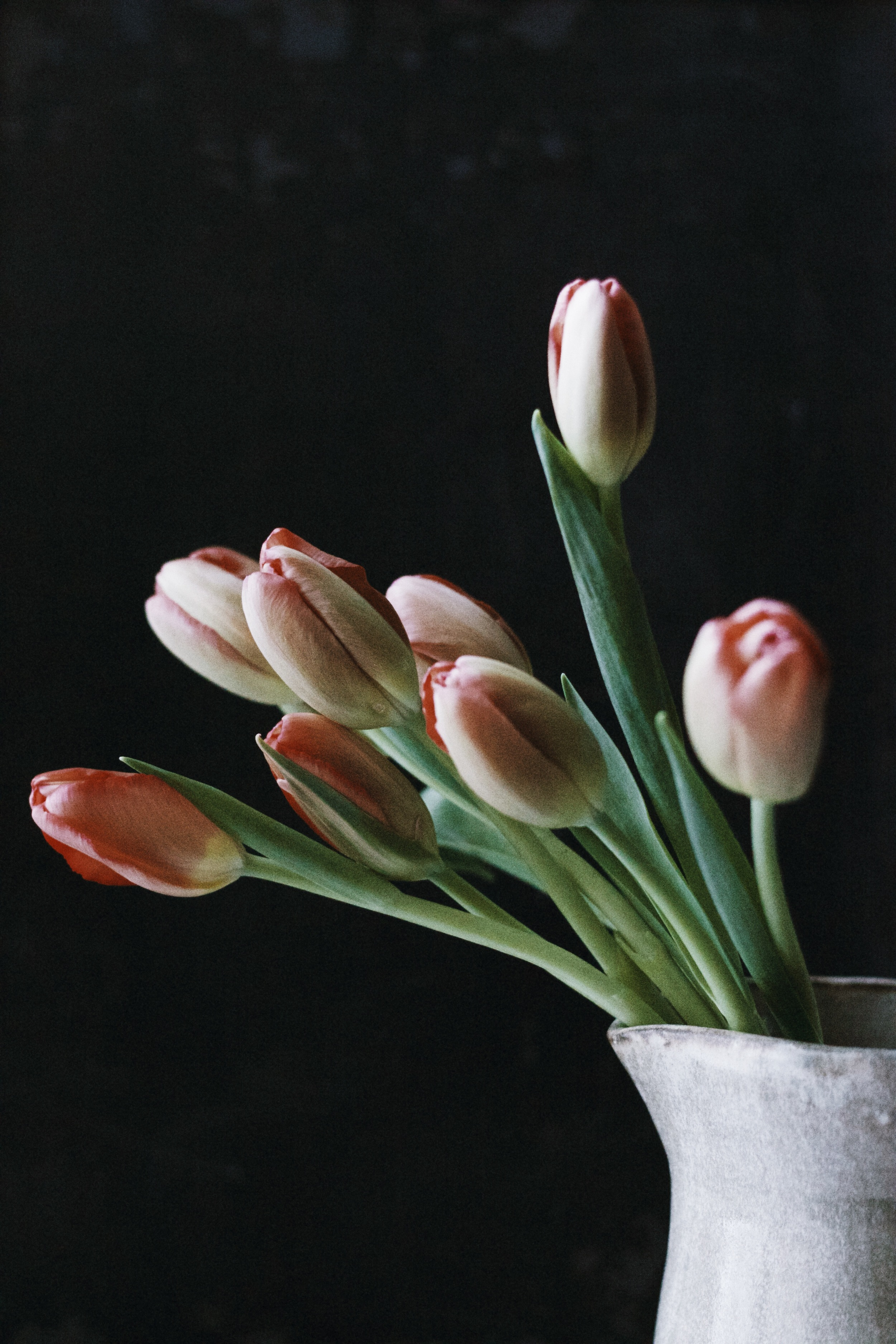 More tulipsbecause they are breathtaking.