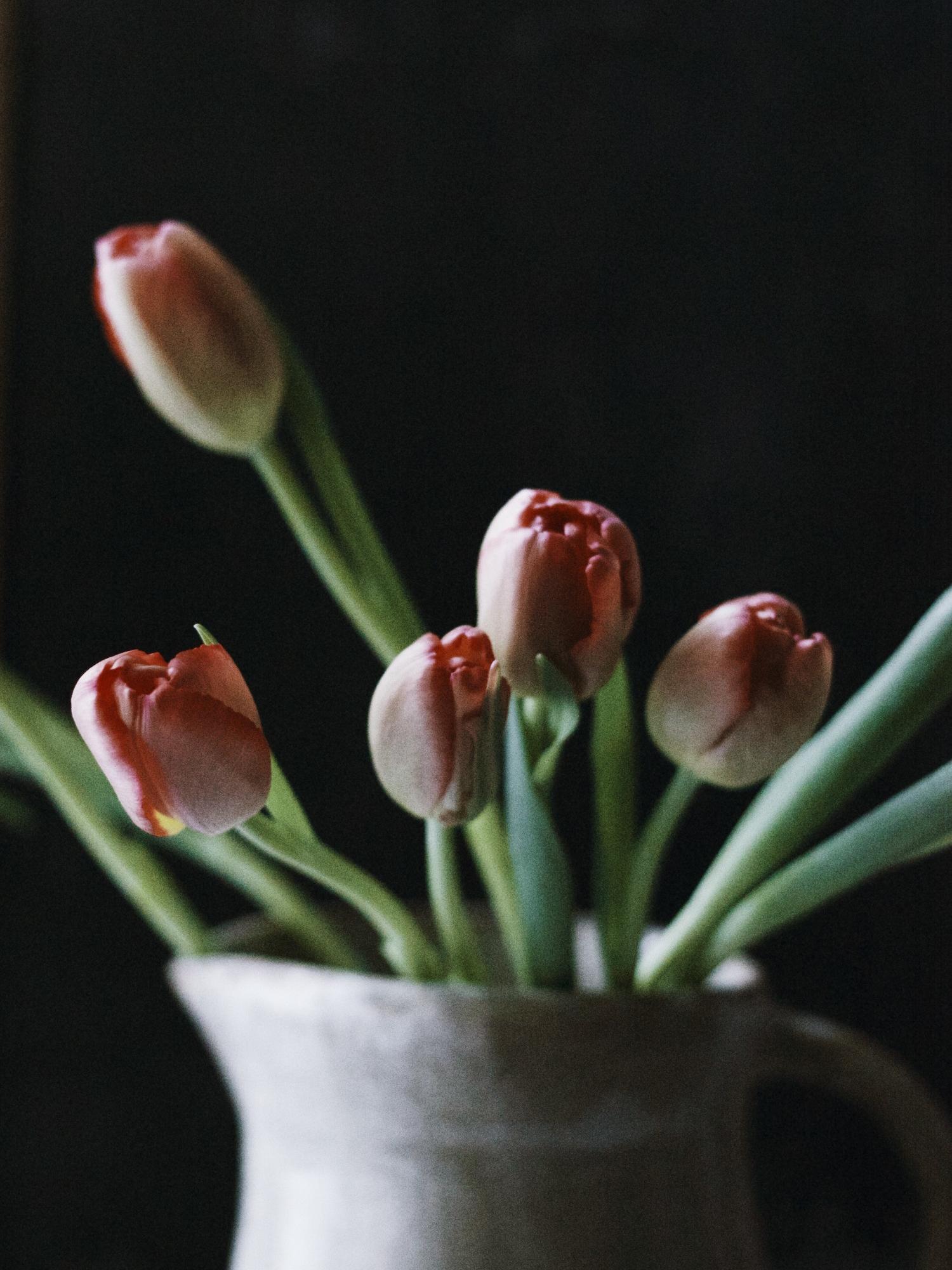 Tulip fix in a  Speck + Stone  pitcher