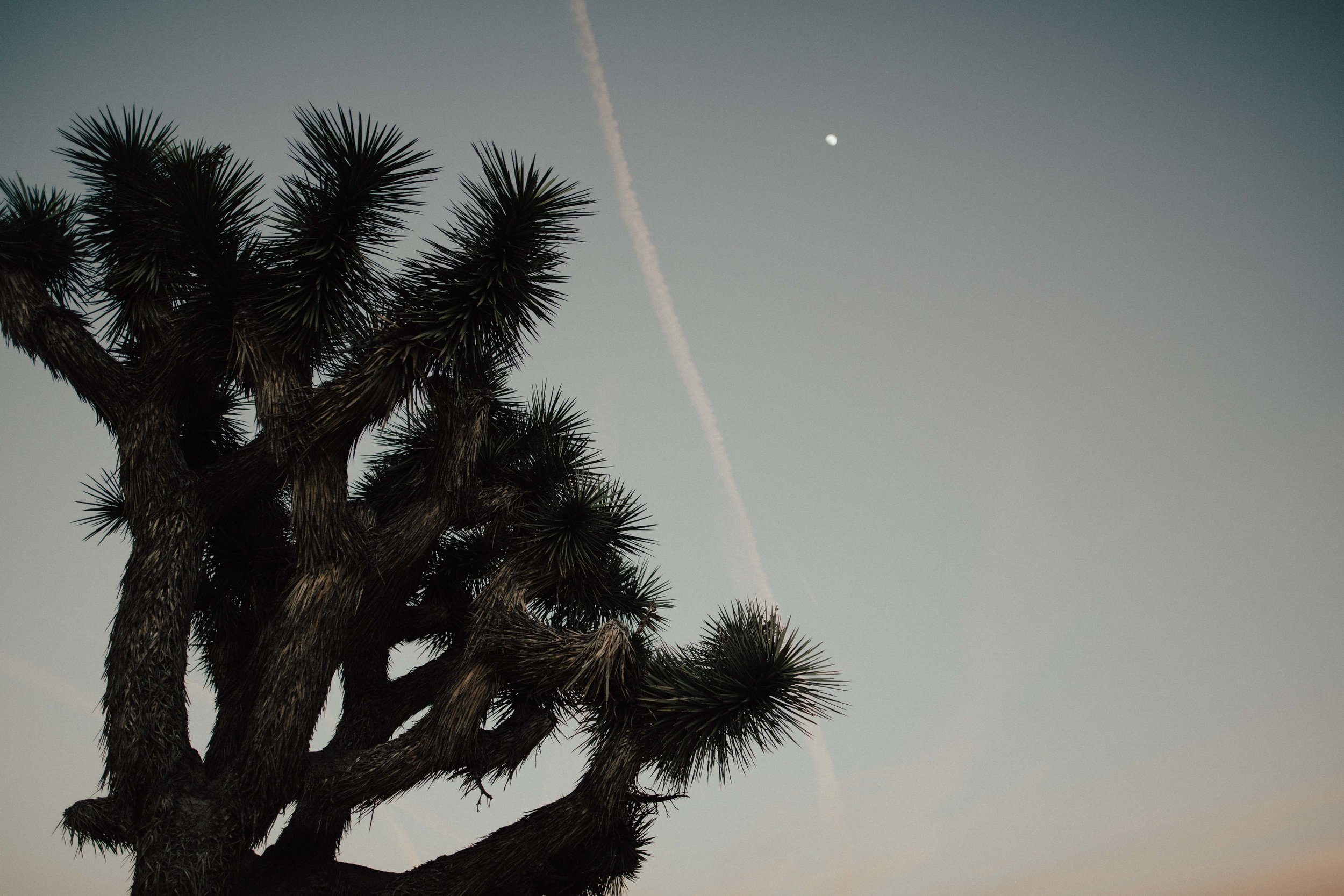 Marcella Laine Photo Joshua Tree Adventure-3582.jpg