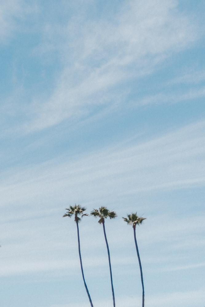 Marcella Laine Intimate California Wedding-6733.jpg