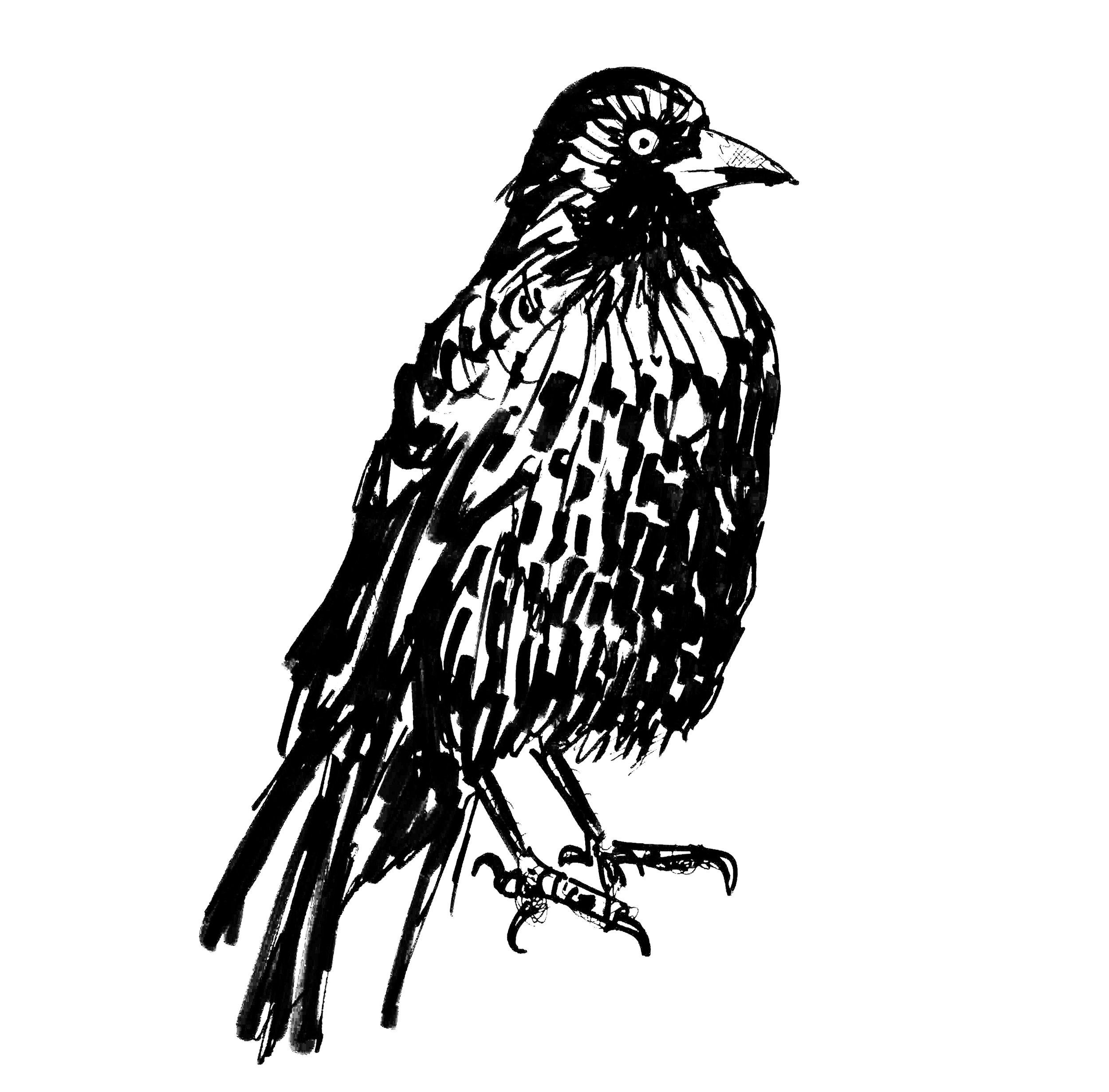 crowsquare.jpg