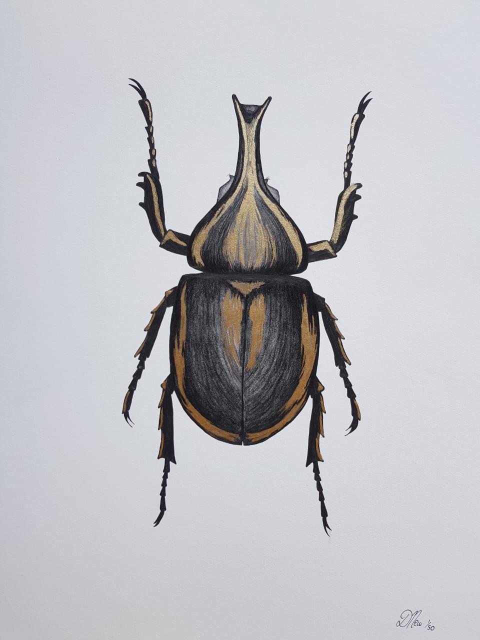 Debbie Beetle.jpeg