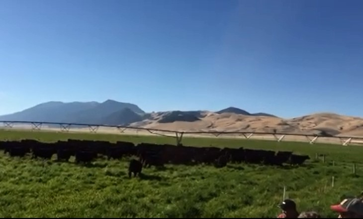 Tour of LaCense Montana Ranch south of Dillon to illustrate the benefits of management intensive rotational grazing.