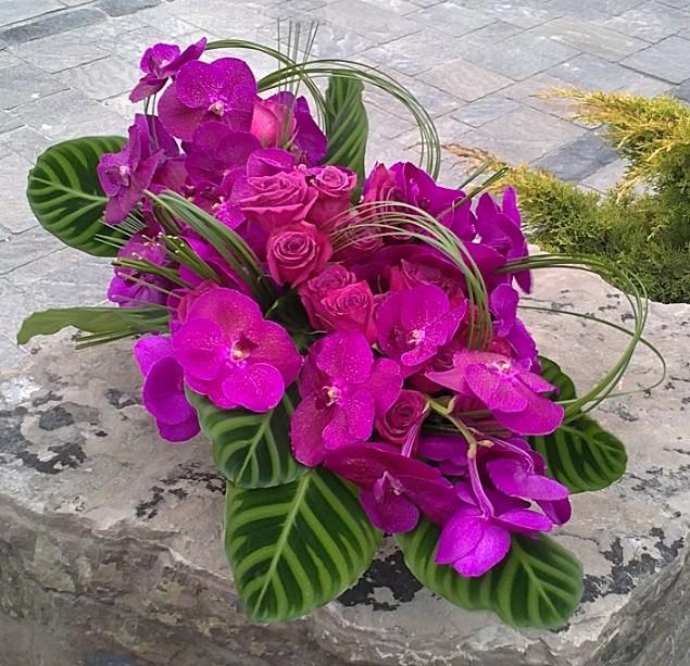 pink vanda orchid.jpg