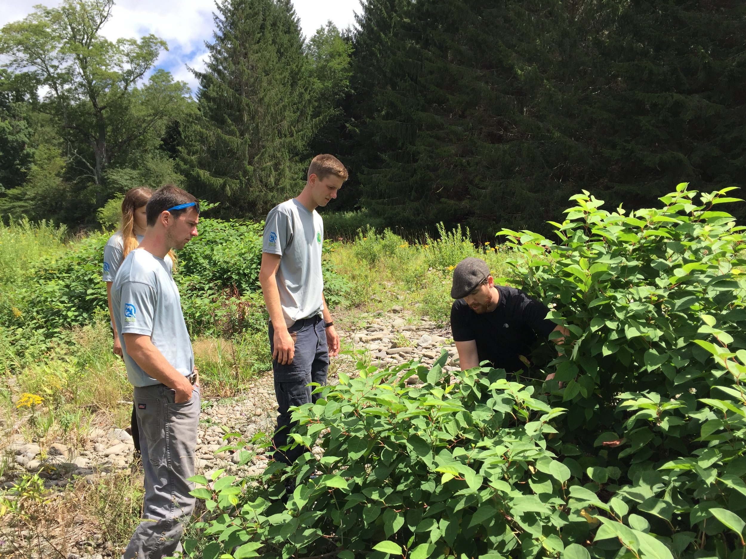 CRISP Campground Steward Intern, Evan Sweeney (right), with the Excelsior Conservation Corps during their third hitch last week in the Beaverkill.