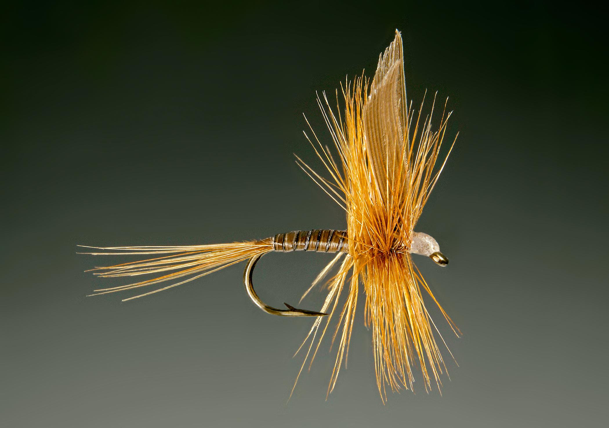 Ginger Quill.57.jpg