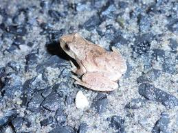 frogcrossing.jpeg