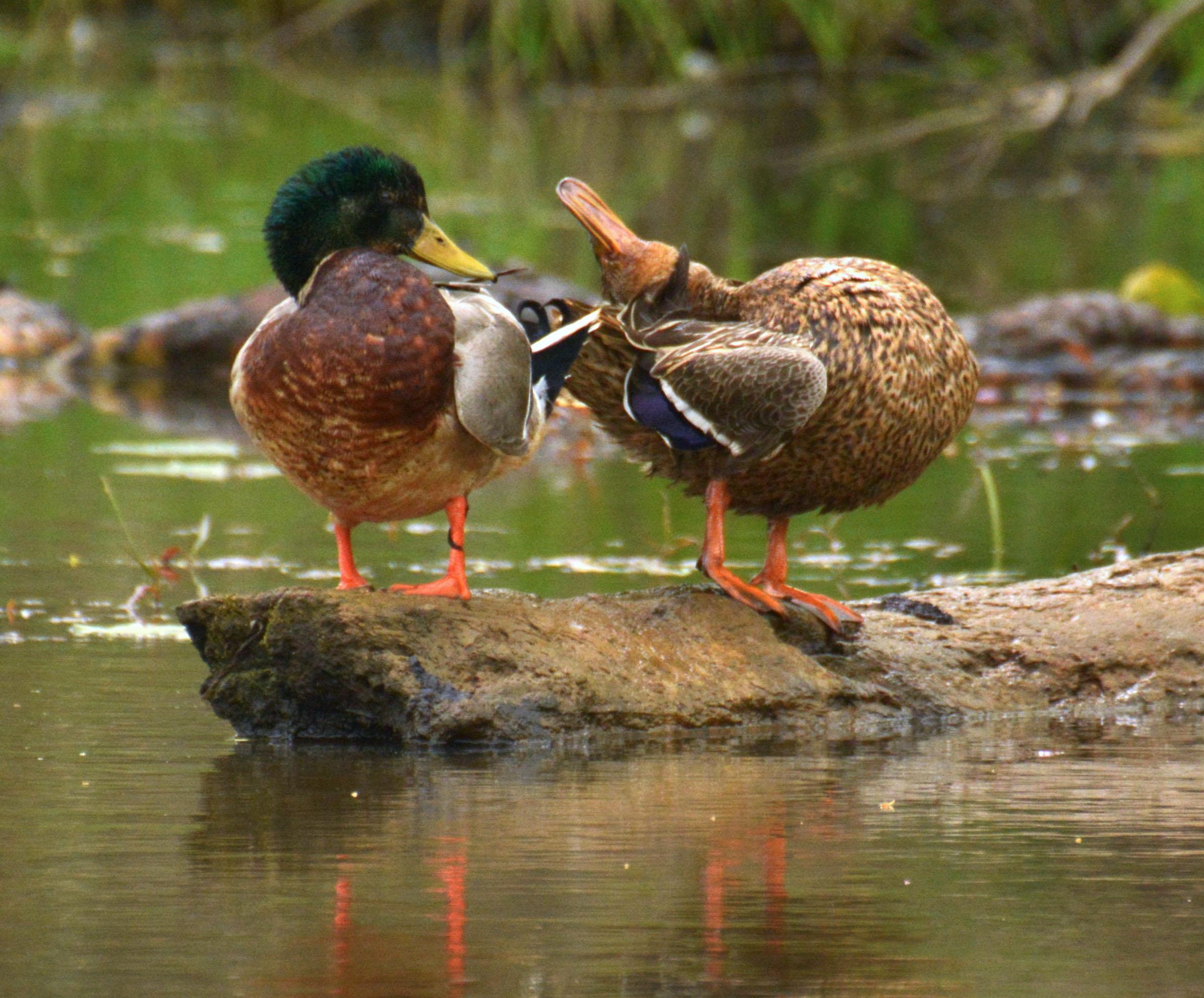 Photo by Jim Peppler - Esopus Bend Nature Preserve