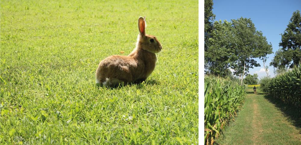 07_coniglio_azienda_agricola_cadememi.jpg
