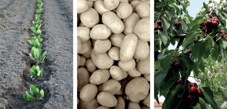 potatoes_cherries_salad_cadememi