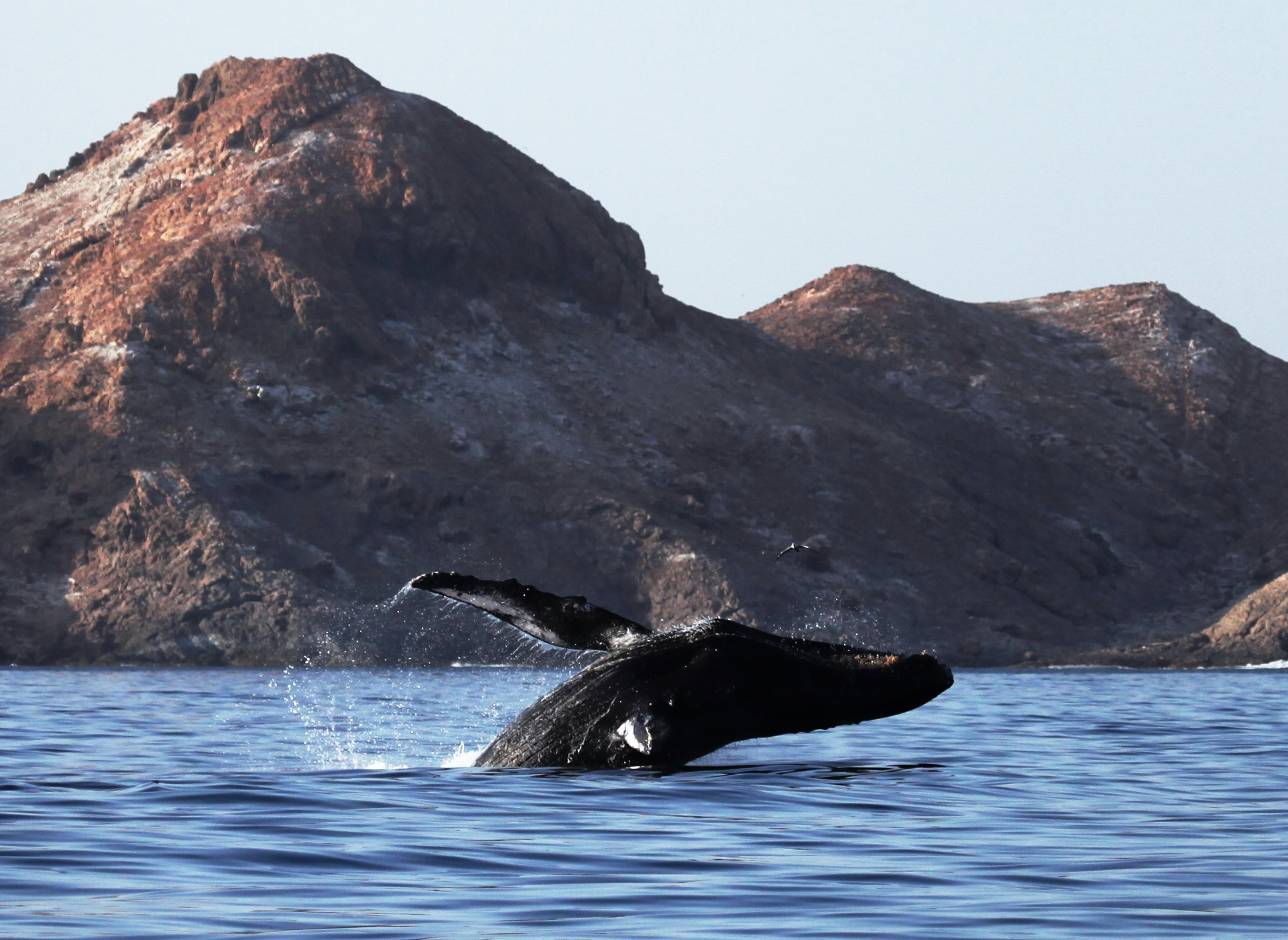 After 70,000 years Oman's unique whales face potential threat -