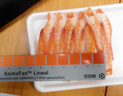 Checking the Crane Bay® Ikejime sushi ebi for color.