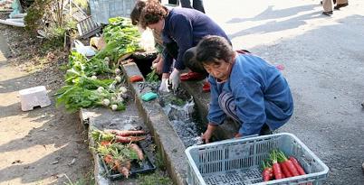 Local ladies wash freshly harvested Kyoto vegetables