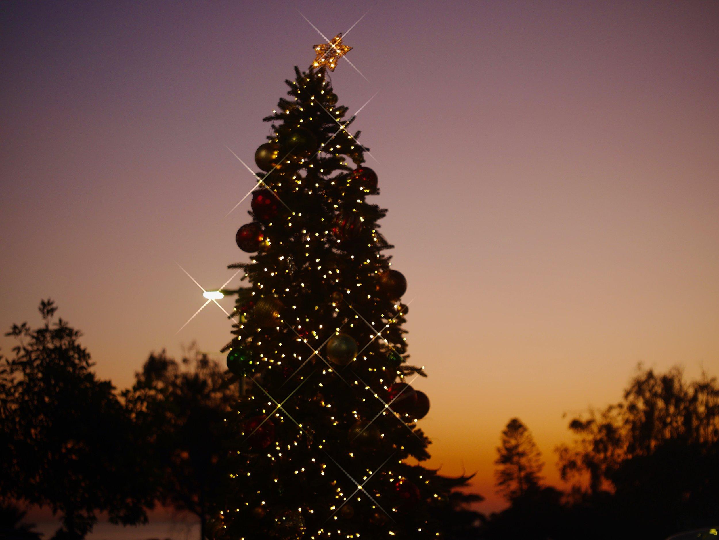 KM Tree Sunset Photos 4.jpg