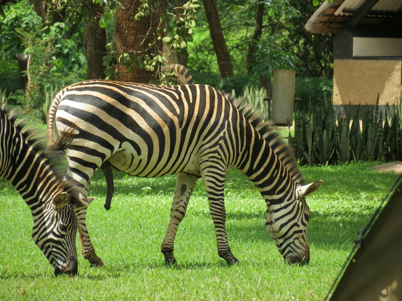 Some of the wonderful animals that inhabit Eureka Campsite.