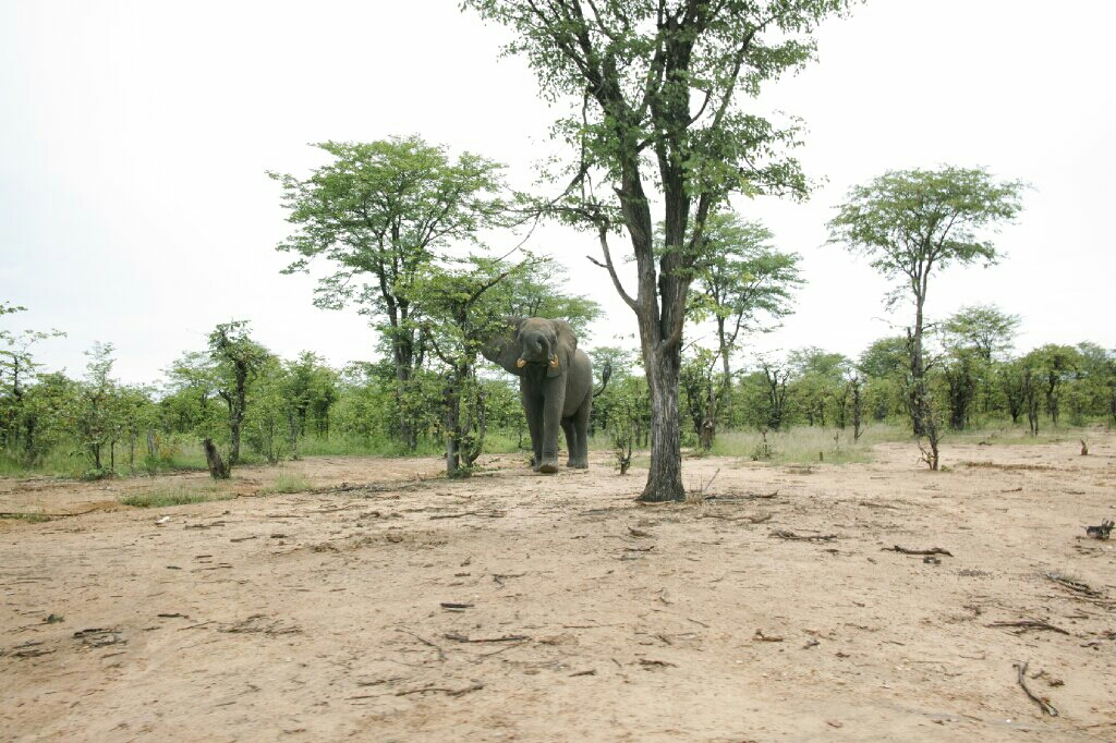 A much happier elephant we encountered when leaving Wildlife Camp. Photo: K.Fleurial