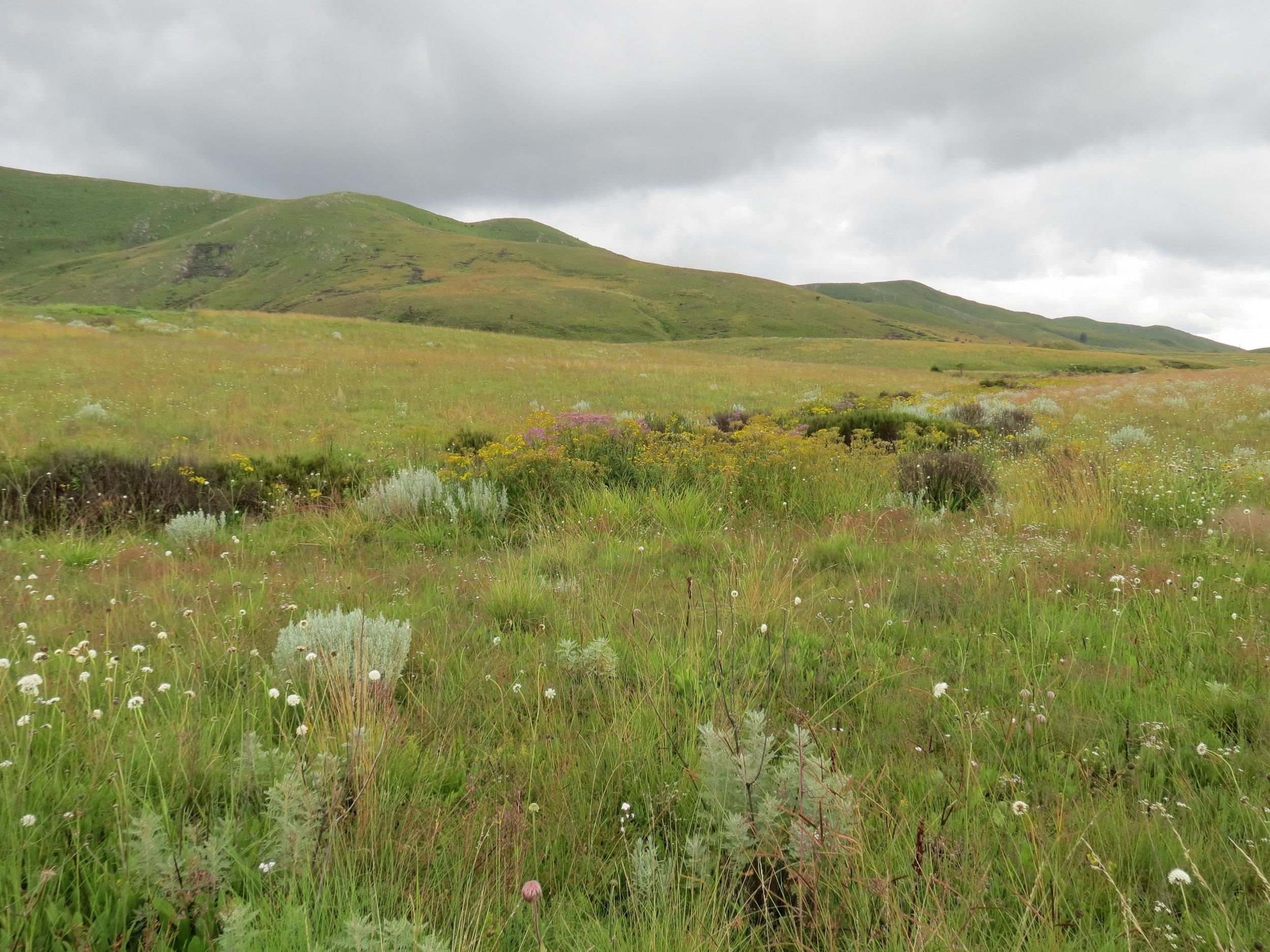 Kitulo Plateau NP